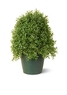 Boxwood Tree W/ Green Pot