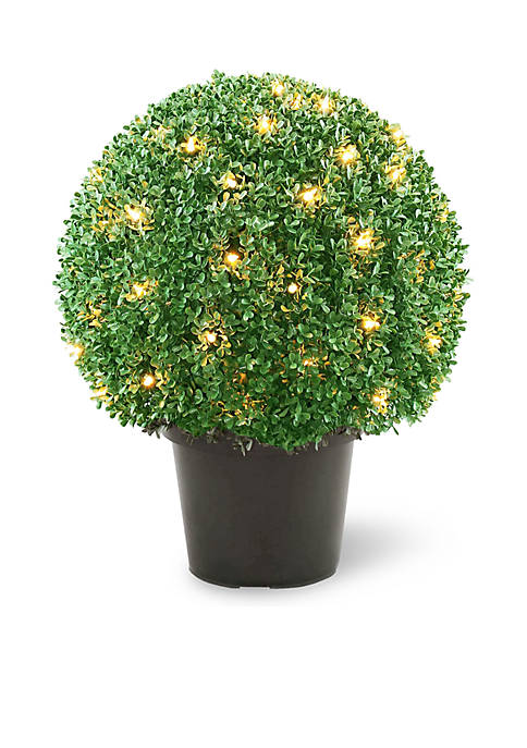 National Tree Company® Mini Boxwood Ball Shaped Topiary