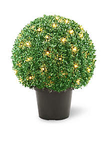 Mini Boxwood Ball Shaped Topiary Tree In Round Green Growers Pot With 70 Clear Lights