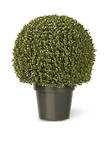 Mini Boxwood Ball with Green Pot