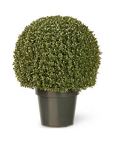 National Tree Company® Mini Boxwood Ball with Green Pot