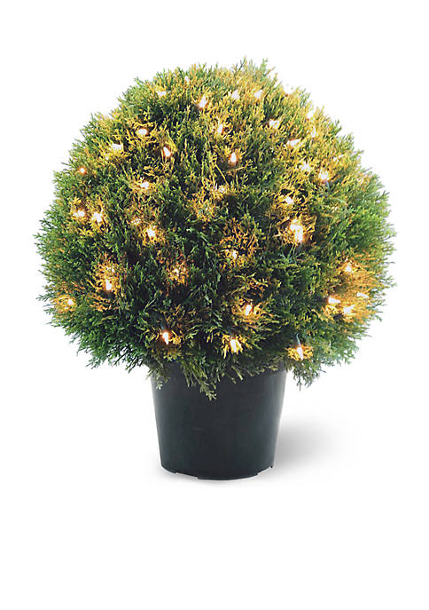 National Tree Company® Cedar Pine Topiary With Round