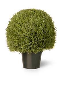 Cedar Pine Topiary In Green Pot