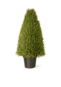 30-in. Upright Juniper with Green Pot