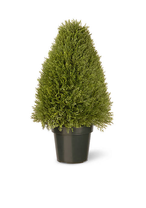 Upright Juniper W/ Green Pot
