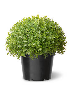 National Tree Company® Globe Japanese Holly with Green Pot