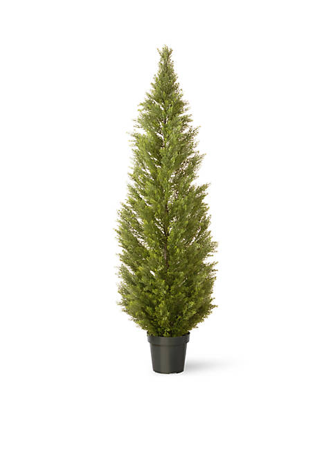 Arborvitae with Green Pot