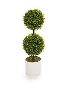 Topiary in White Pot