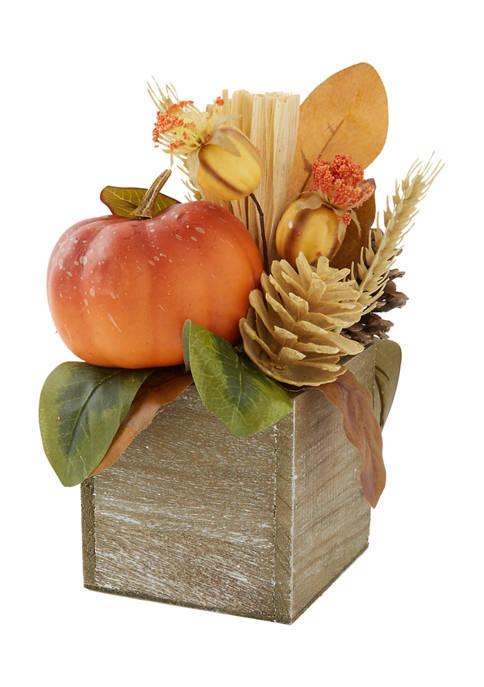 Mixed Pumpkin Sitabout