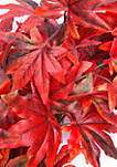 Faux Maple Leaf Wreath