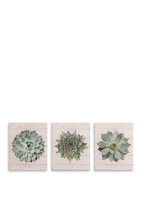 Patton Picture 8 x 10 Succulents on Wood,