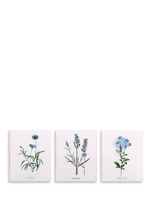 8 x 10 Lavender Botanical Drawing, Set of 3 Canvas Art
