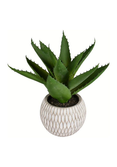 Green Succulent in Container