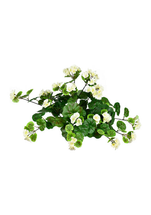 White Hanging Geranium Bush