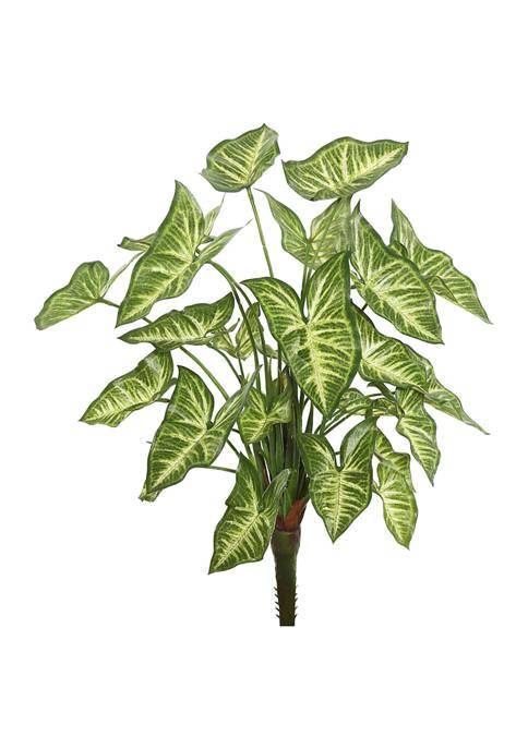 Green Syngonium Bush