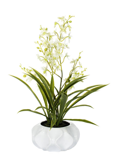 Potted Green Orchid