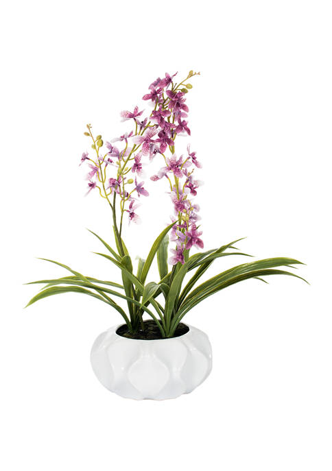 Potted Lavender Orchid