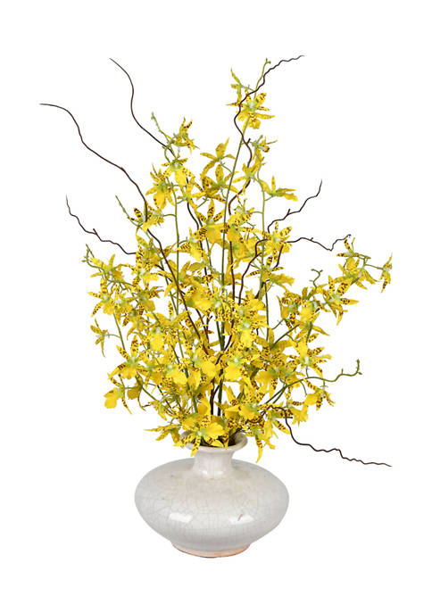 Potted Yellow Dancing Orchid