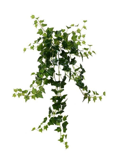 Green Ivy Hanging Bush