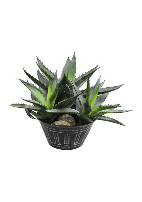 Green Succulent in Galvanized Pot