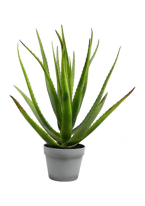 Green Aloe in Round Gray Pot