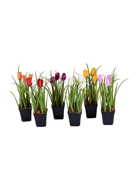 Tulips in Black Plastic Planters Pots - Set of 6