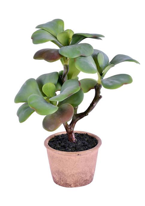 Green Succulent in Paper Pot