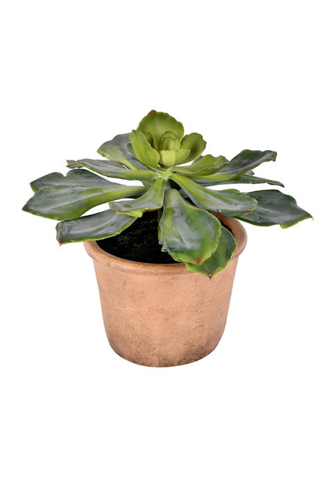 Succulent in Paper Pot
