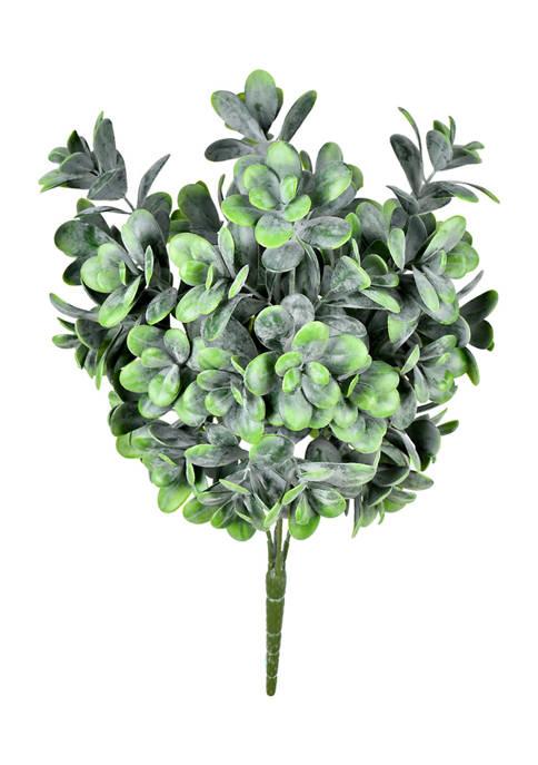 Green Jade Bush