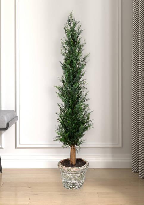 Potted Cedar Tree in Paper Pot