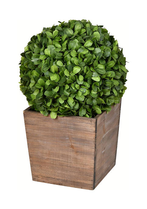 Potted Boxwood Ball in Wooden Pot
