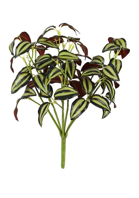 Vickerman Green Spiderwort Bush