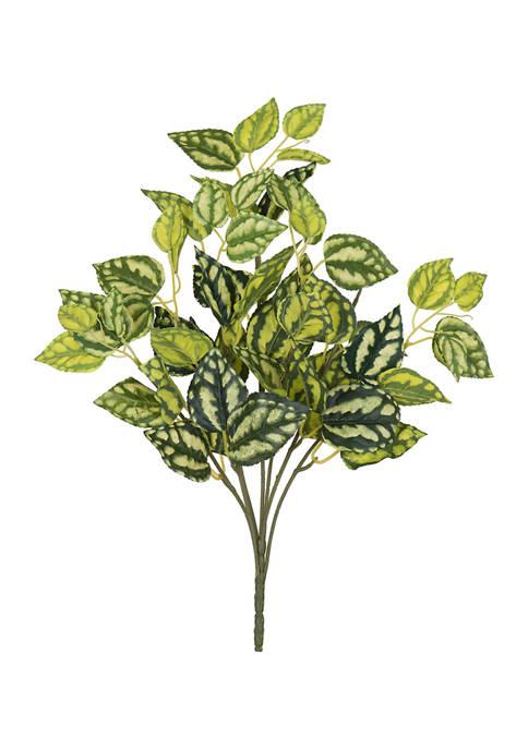 Vickerman Light Green Spiderwort Bush