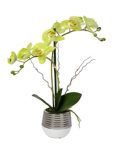Vickerman Green Phalaenopsis In Metal Pot