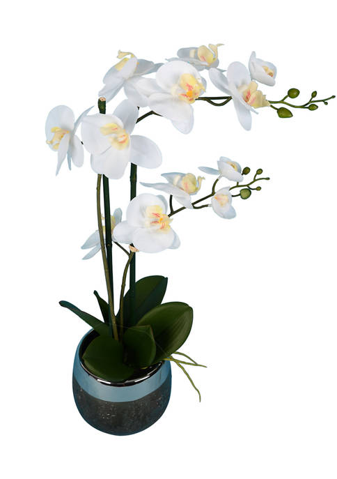 White Phalaenopsis In Metal Pot
