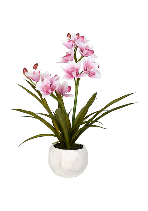 Pink Orchid Arranged in a Ceramic Pot