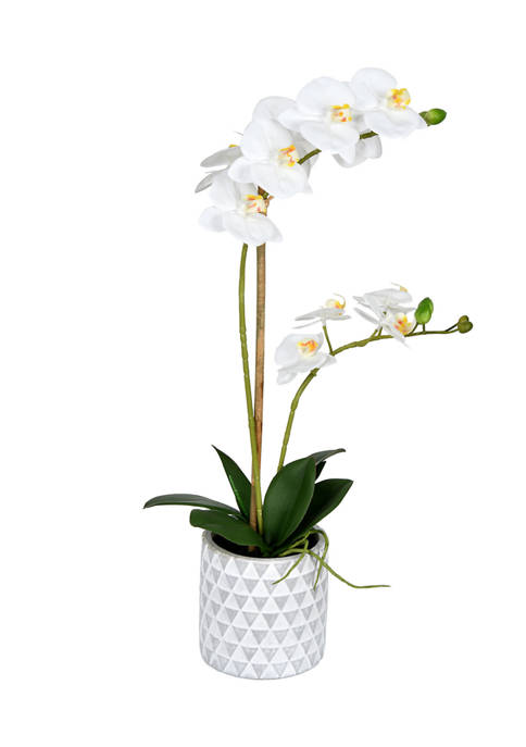 Potted Real Touch White Phalaenopsis Spray