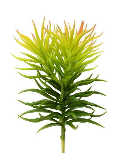 Vickerman Green Crassula Tetragon Pick