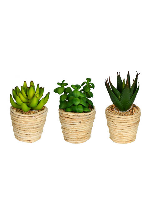 Vickerman Assorted Potted Succulents