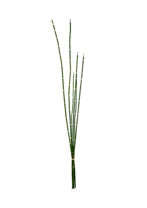 Vickerman Green Horsetail Bundle
