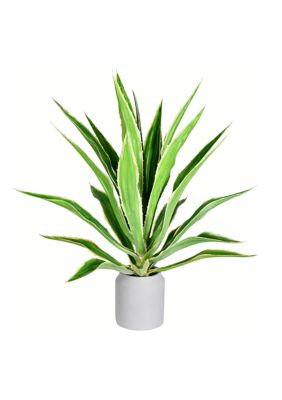 Vickerman Potted Green Yucca Plant