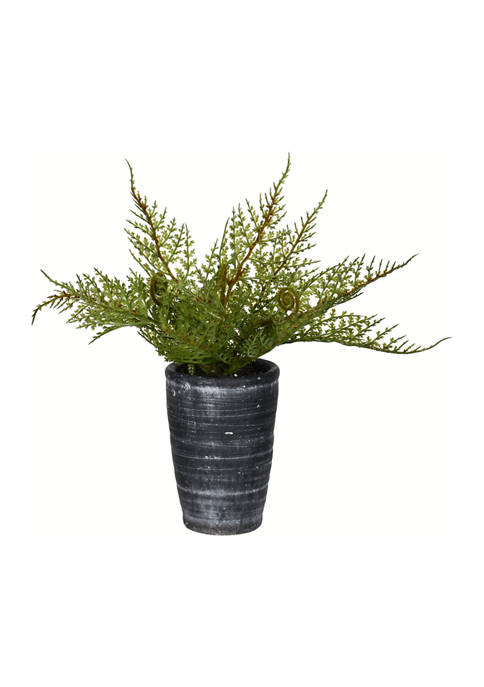 Green Potted Asparagus Fern