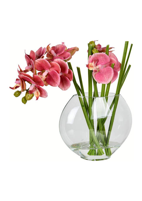 Vickerman Pink Butterfly Orchid In Glass Pot