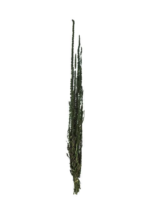 Vickerman Green Amaranthus Bundle
