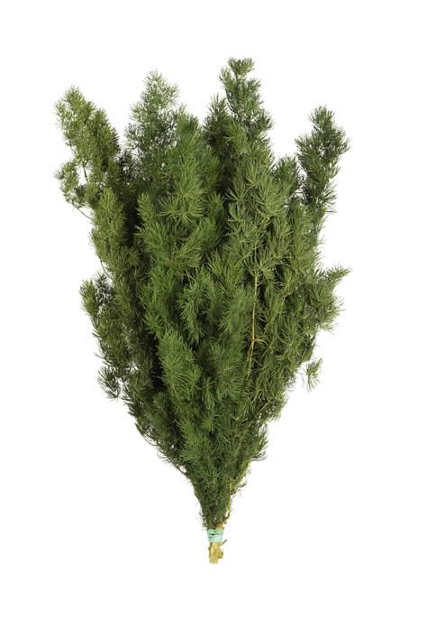 Stemmed Green Fern