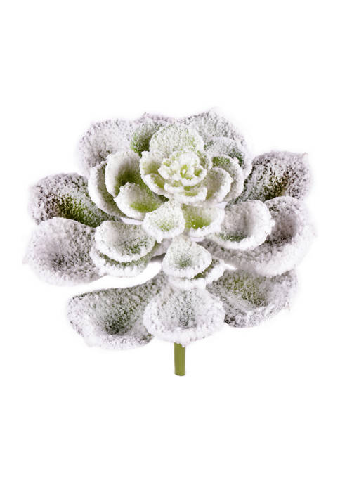 Vickerman Frosted Succulents