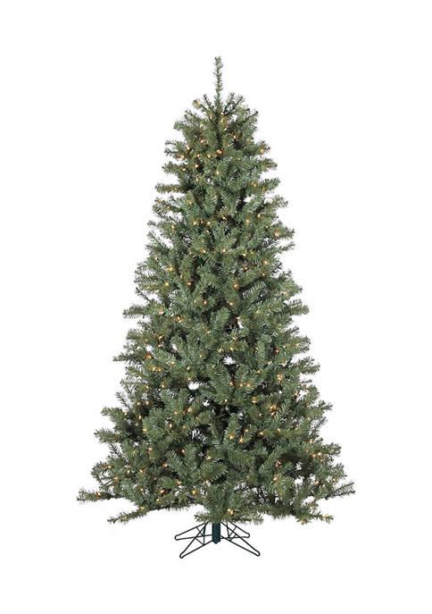 Valley Spruce Tree