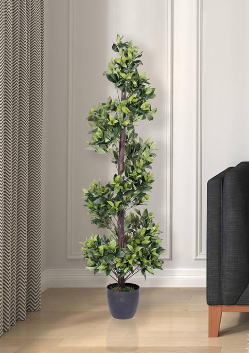 Spiral Bay Tree