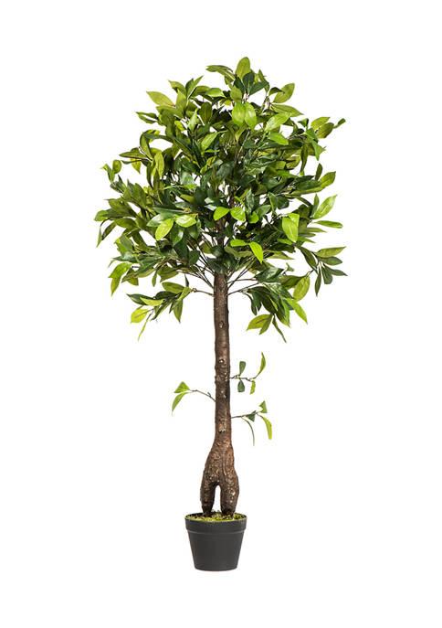 Vickerman Camellia Tree