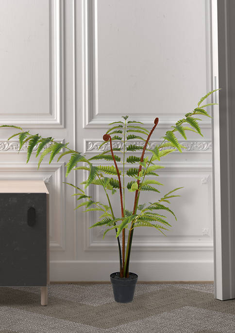 Potted Leather Fern
